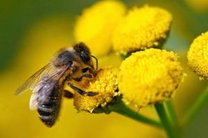 Esta imagem possuí um atributo alt vazio; O nome do arquivo é a30c5-polinizacao-por-abelhas-4.jpeg